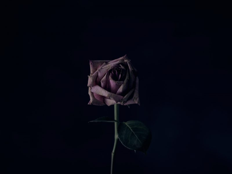 Death Cafe image of a rose, God Grief